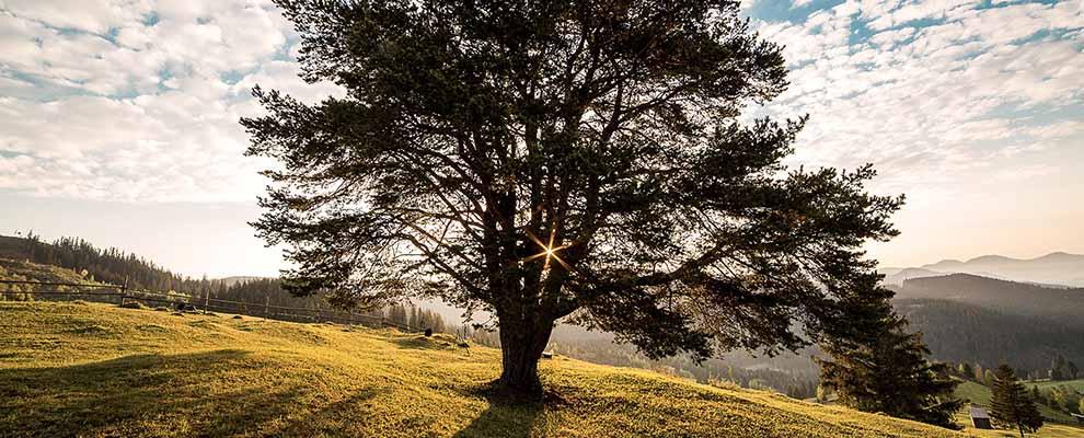 MANTRA tree slider